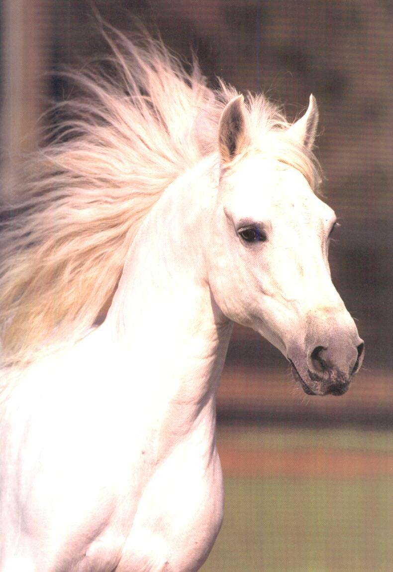 http://horseplanet.narod.ru/photo125.jpg